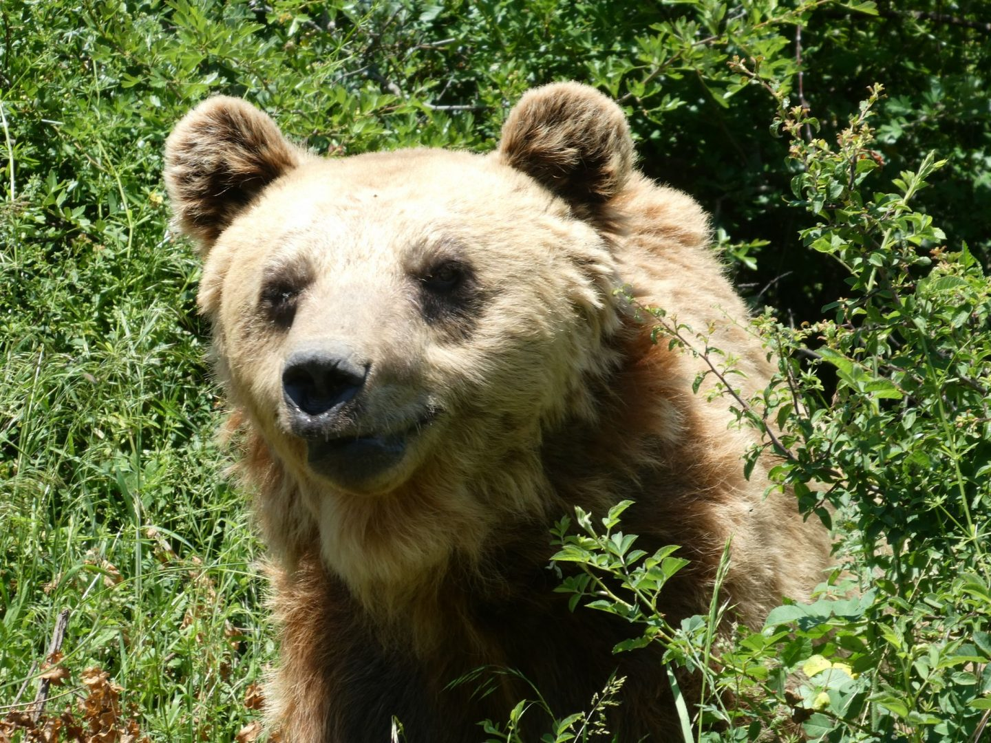 Kosovo Bear Sanctuary
