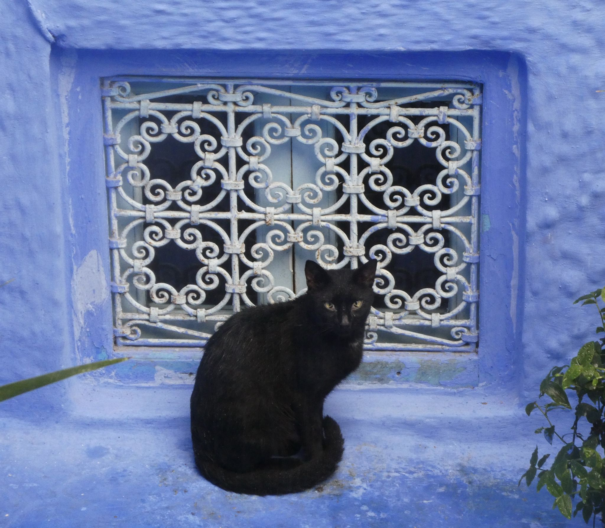 Cats of Morocco – Moon River and We