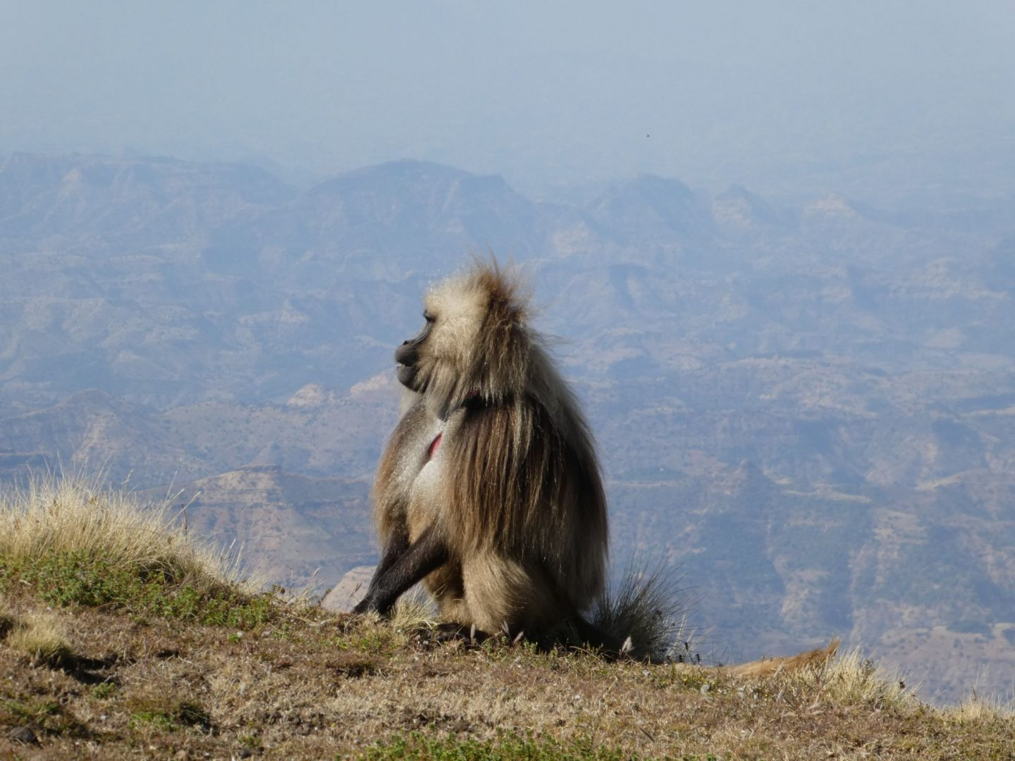 Simien Mountains trek, Ethiopia (24 to 29 December 2018)
