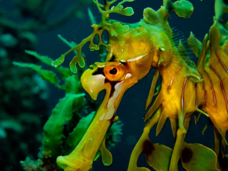 Under the Sea in South Australia